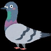 bird_hato.png