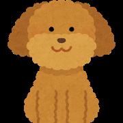dog_toypoodle_brown.png